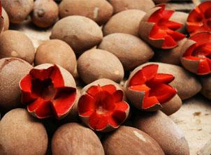 Novas frutas exóticas chegam ao mix da Hortifruti